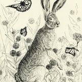 Hare Among the Monarchs
