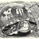 Turtle_lowcomp_color